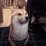 野良猫の寿命は3年-7(犬猫の共同生活)