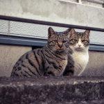 野良猫の寿命は3年-1(出会い)