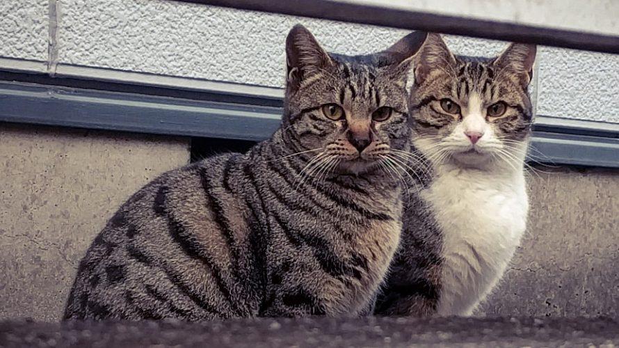 野良猫の寿命は3年・・・1
