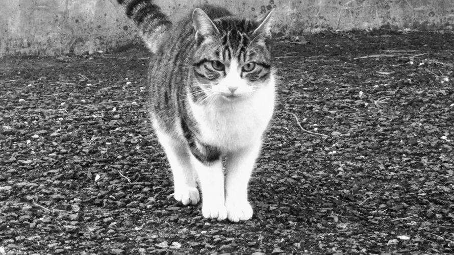 野良猫の寿命は3年-9(脱走劇)