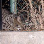 野良猫の寿命は3年-2(野良ちゃんの保護)