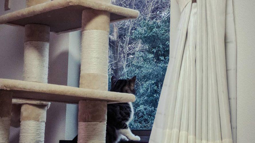 外を見るニコ(幼猫)|野良猫の寿命は三年