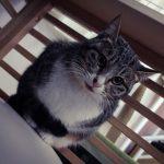 野良猫の寿命は3年-13(志村どうぶつ園の世界)