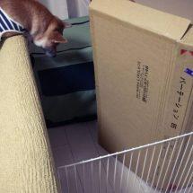 野良猫の寿命は3年
